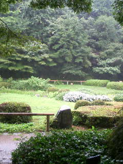 雨の植物園.JPG